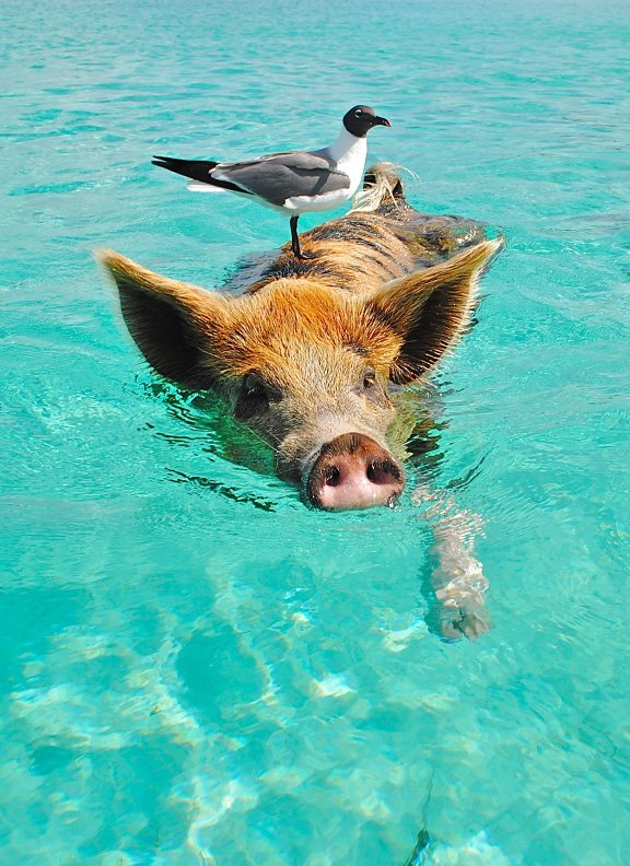 Bahamas cruise main
