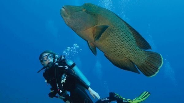 Maldives diving - Theia - 5