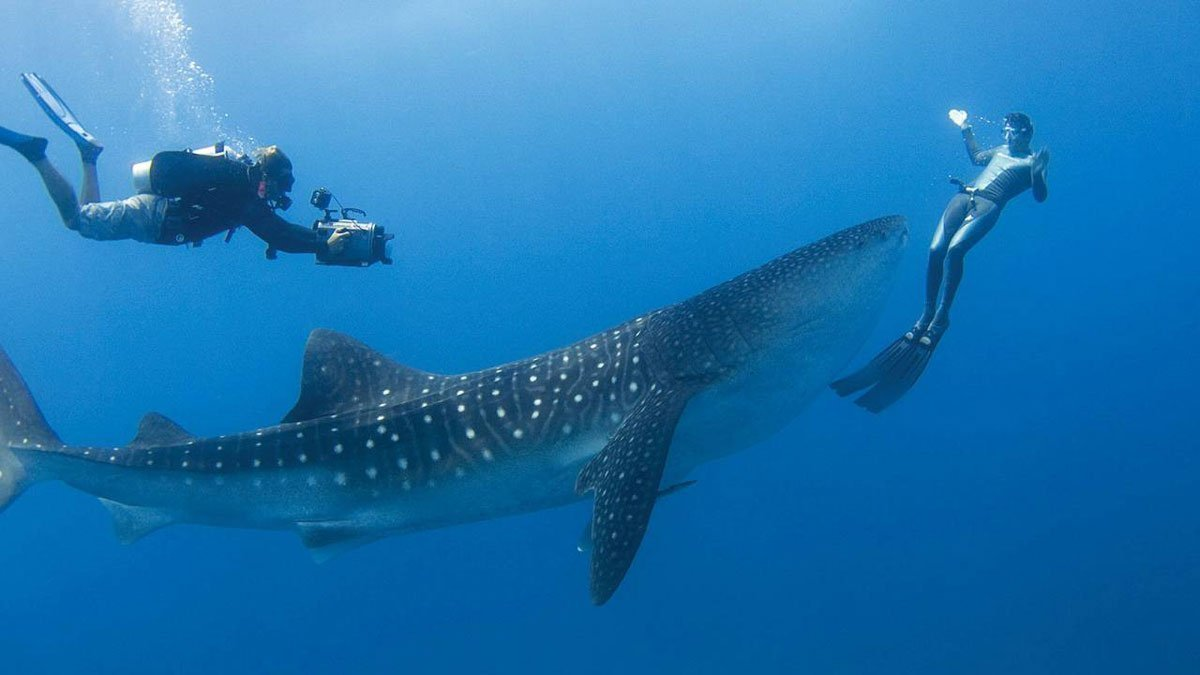 Maldives diving - Theia - 6